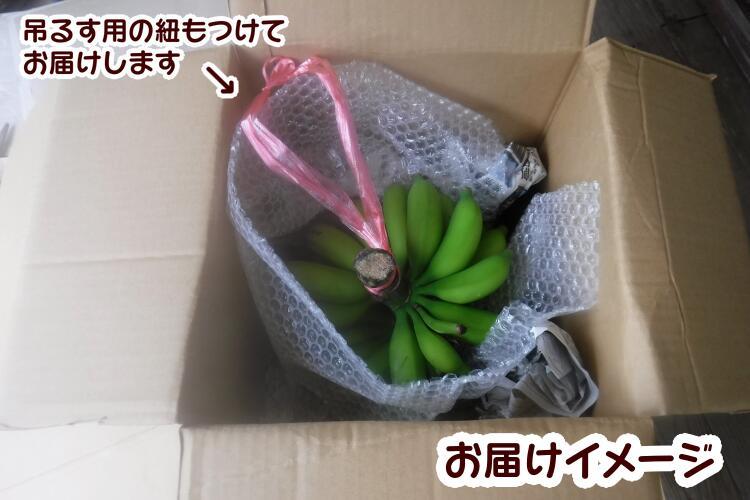 【ふるさと納税】園田農園、島バナナ