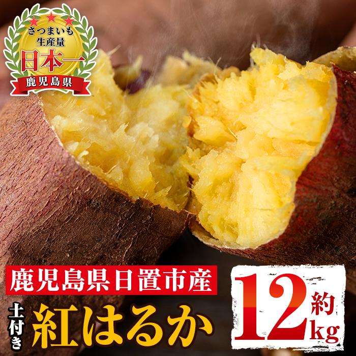 【ふるさと納税】《訳あり》鹿児島県日置市産さつま芋!紅はるか(約12kg・土付き)甘くておいしいお芋を心を込めてお届けします!【にしぞの農園】