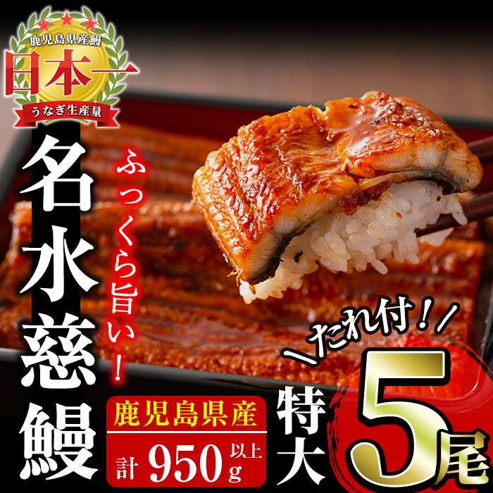 鹿児島県産 うなぎ 蒲焼 名水慈鰻 950g