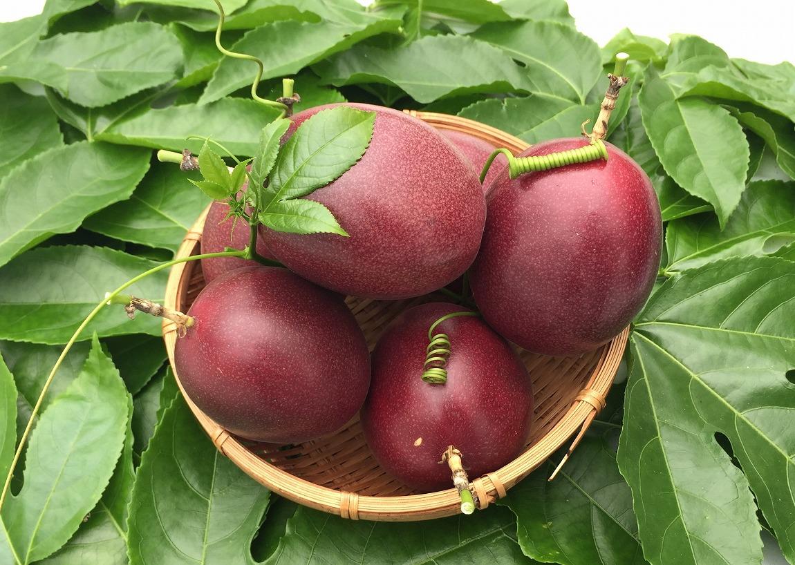 【ふるさと納税】農薬不使用!完熟パッションフルーツ3kg