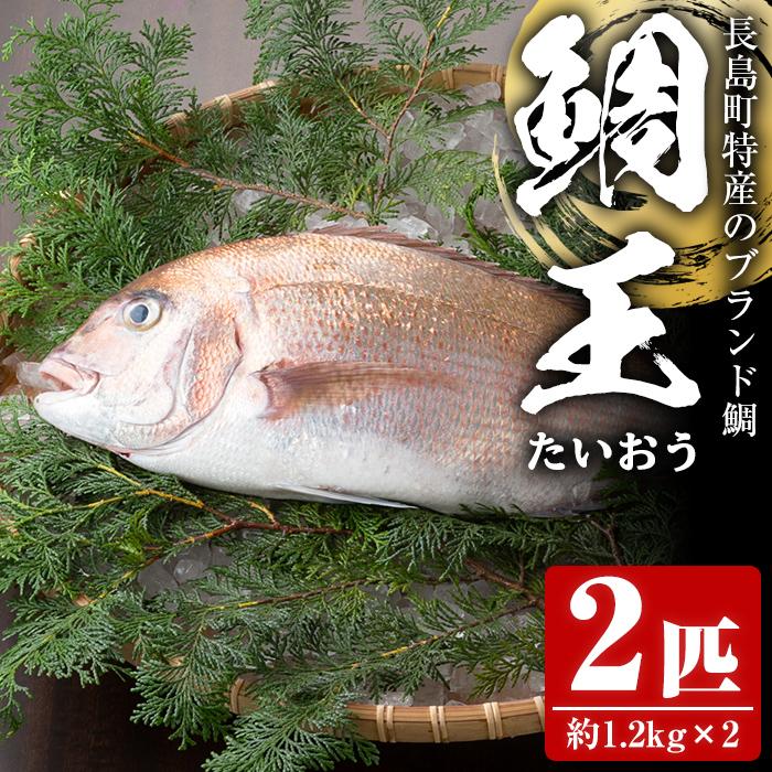 【ふるさと納税】長島町特産の鯛王(2匹セット)_jfa-22