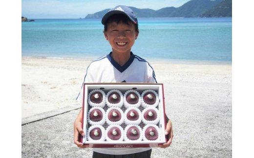 【ふるさと納税】D-14 加計呂麻島産パッション(ご家庭用 約3kg×2箱)カケロマパッショングループ