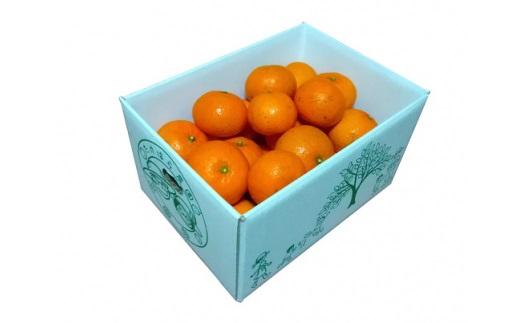 【ふるさと納税】BD-2 3kg×2箱 たけはら農園のたんかん ご家庭用