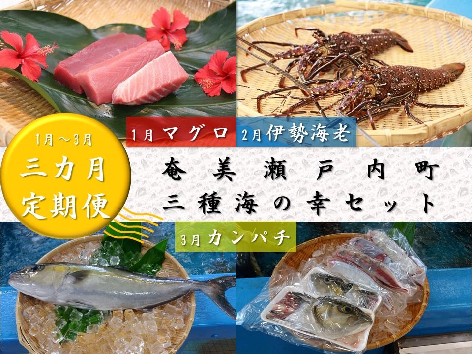 【ふるさと納税】AO-7 【3か月定期便】奄美瀬戸内町三種海の幸セット