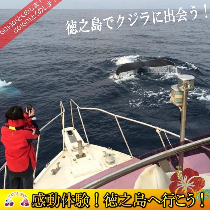 【ふるさと納税】~さぁ徳之島の海へ旅しよう~感動の瞬間!クジラウォッチング体験(3時間)