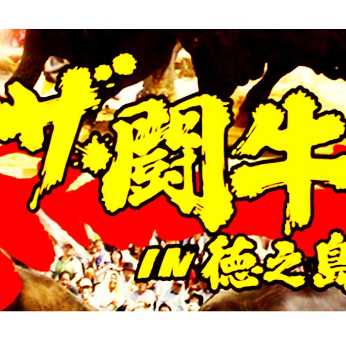 ふるさと納税 買物 令和元年度10月開催≫徳之島伝統闘牛大会DVD プレゼント