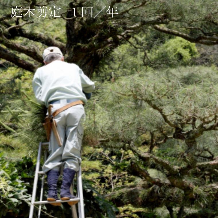 【ふるさと納税】お庭の植木剪定サービス, かごや:1781d18b --- economiadigital.org.br