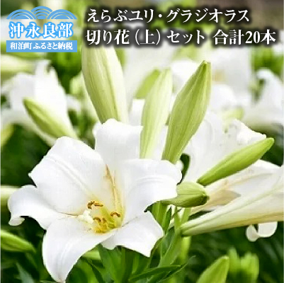 【ふるさと納税】沖永良部島で大切に育てられた えらぶユリ・グラジオラス切り花(上)セット