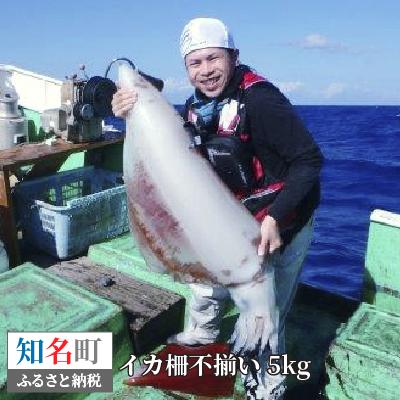 【ふるさと納税】沖永良部島 イカの王様!ソデイカ得得 5kg