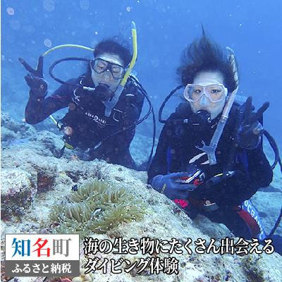 【ふるさと納税】海の生き物にたくさん出会えるダイビング体験