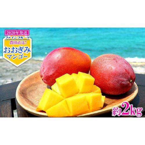 【ふるさと納税】【2020年発送】農園直送!ファインフルーツおおぎみマンゴー【約2kg】
