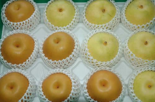最高品質詰め合わせ 二十世紀梨 豊水梨 約10キロ大玉24~28個入 贈答向け秀品 豊水 梨 20世紀梨 20世紀 二十世紀 和梨 SSS