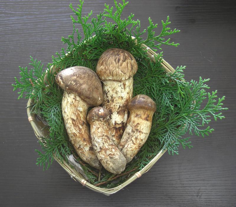 松茸 国産 つぼみ 特選品 330g 2~5本程度入 竹かご付 まつたけ マツタケ 長野産 ギフト 産地直送 S10