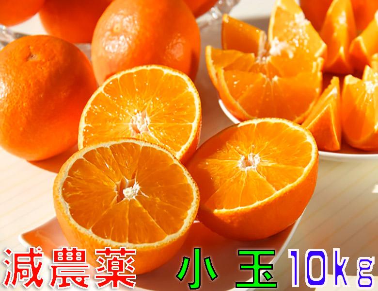 減農薬 紅まどんな と同品種 みかん あいか 約10kg 小玉サイズ 愛媛 産地直送 ore 大三島