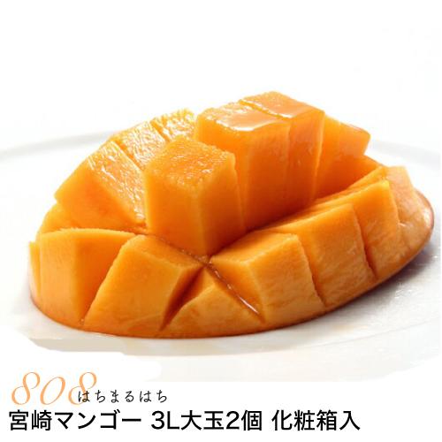 宮崎マンゴー 贈答向け 3L大玉2個 化粧箱入 宮崎 ギフト マンゴー