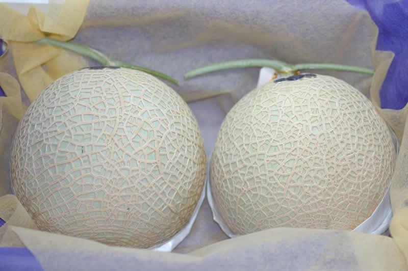 静岡産 マスクメロン 大玉2玉 化粧箱入 ギフト