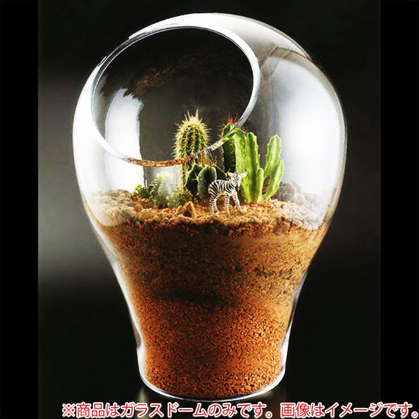 ガラスドーム グラスドーム ドームグラス ディスプレイドーム T-28047