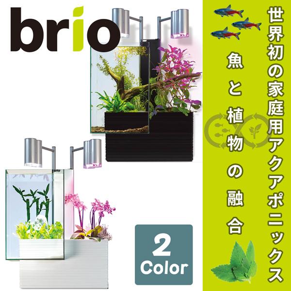 ブリオ brio 水槽 フルセット 西日本60Hz 家庭用 アクアポニックス brio35 植物 魚 送料無料