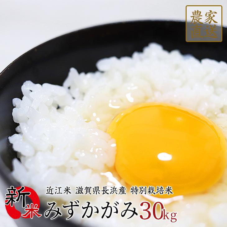 【予約販売】新米 みずかがみ 30kg 令和2年産 近江米 滋賀県産
