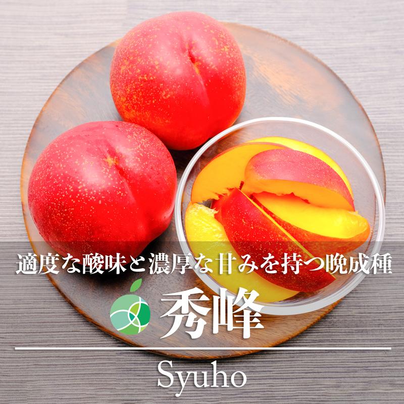 適度な酸味と濃厚な甘みを持つ晩成種 送料無料 上品 秀峰 ネクタリン 贈答用 長野県産 70%OFFアウトレット 約2kg 6~12玉