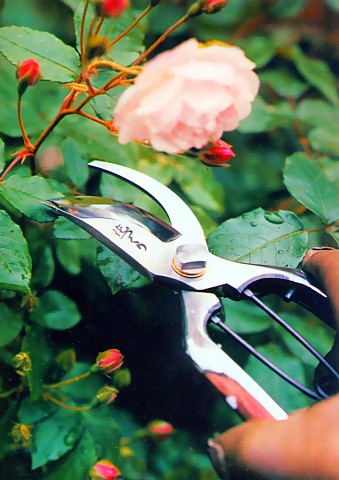 Hidehisa made flowers made made of the finest cutting maintenance kit with Japan pruning shears money stop 200 mm (Tung into) this Hitachi yasugi steel YCS3 roses pruning shears echigo Sanjo artisans crafting