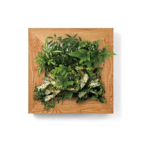 PIANTA×STANZA(ピアンタ・スタンツァ)マイギャラリー・Mサイズ500×500mmクリア(植物セット:縦2段)