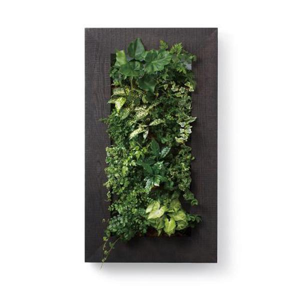 PIANTA×STANZA(ピアンタ・スタンツァ)マイギャラリー・Lサイズ500×900mmエボニー(植物セット:縦4段)