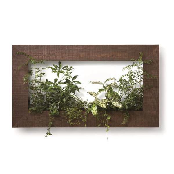PIANTA×STANZA(ピアンタ・スタンツァ)マイギャラリー・Lサイズ900×500mmチーク(植物セット:ベーシック)
