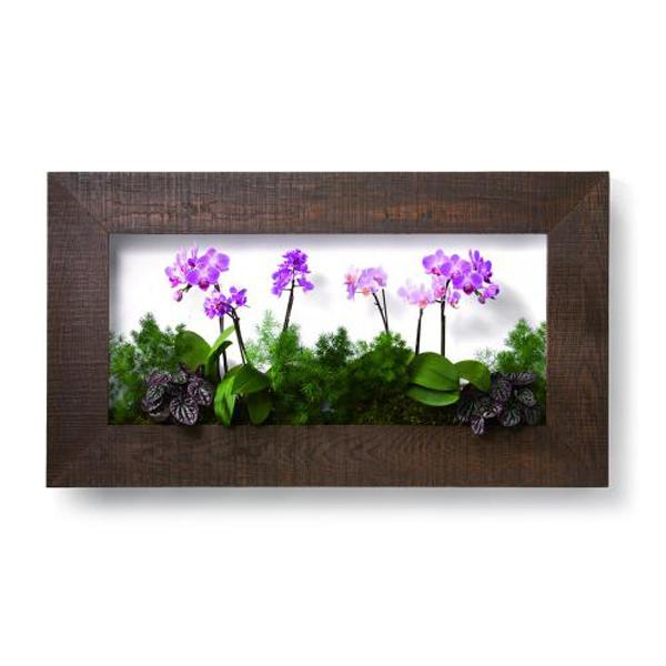 PIANTA×STANZA(ピアンタ・スタンツァ)マイギャラリー・Lサイズ900×500mmチーク(植物セット:フラワー)