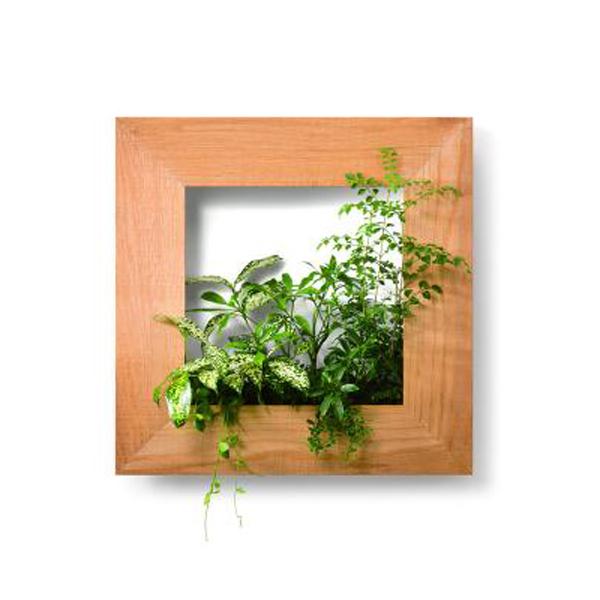 PIANTA×STANZA(ピアンタ・スタンツァ)マイギャラリー・Mサイズ500×500mmクリア(植物セット:ベーシック)