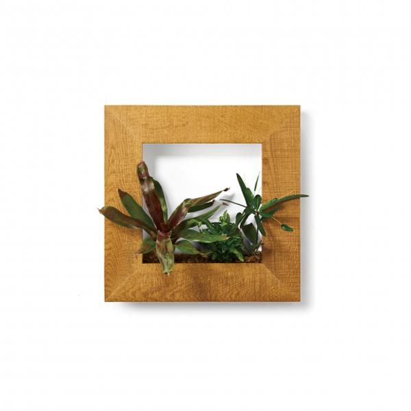PIANTA×STANZA(ピアンタ・スタンツァ)マイギャラリー・Mサイズ500×500mmクリア(植物セット:プレミアム)