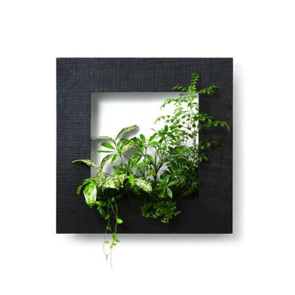 PIANTA×STANZA(ピアンタ・スタンツァ)マイギャラリー・Mサイズ500×500mmエボニー(植物セット:ベーシック)
