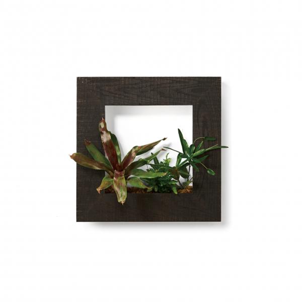 PIANTA×STANZA(ピアンタ・スタンツァ)マイギャラリー・Mサイズ500×500mmエボニー(植物セット:プレミアム)