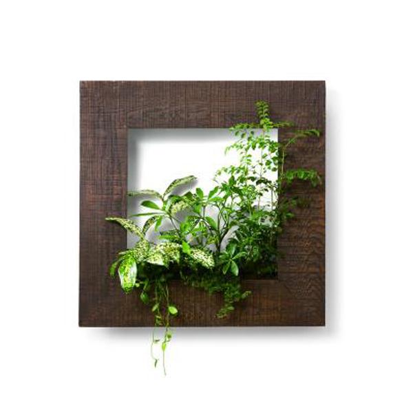PIANTA×STANZA(ピアンタ・スタンツァ)マイギャラリー・Mサイズ500×500mmチーク(植物セット:ベーシック)