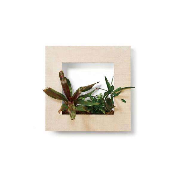 PIANTA×STANZA(ピアンタ・スタンツァ)マイギャラリー・Mサイズ500×500mmホワイトウッド(植物セット:プレミアム)