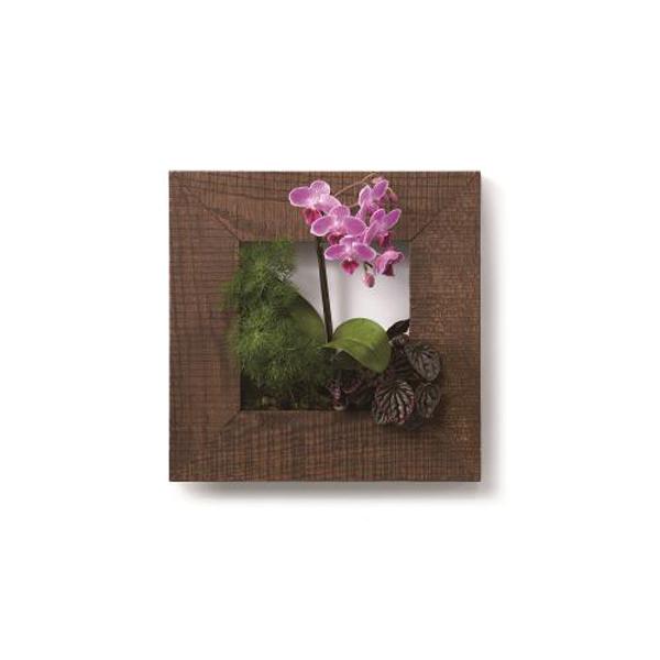 PIANTA×STANZA(ピアンタ・スタンツァ)マイギャラリー・Sサイズ300×300mmチーク(植物セット:フラワー)