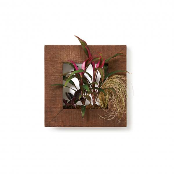 PIANTA×STANZA(ピアンタ・スタンツァ)マイギャラリー・Sサイズ300×300mmチーク(植物セット:プレミアム)