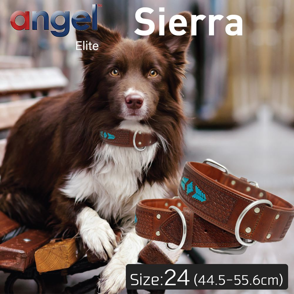 【Angel】エンジェル Sierra 24インチ 首輪 犬 アルゼンチン産 牛革 本革 真鍮 小型 子犬 大型 中型 高級 手彫り 錆びにくい