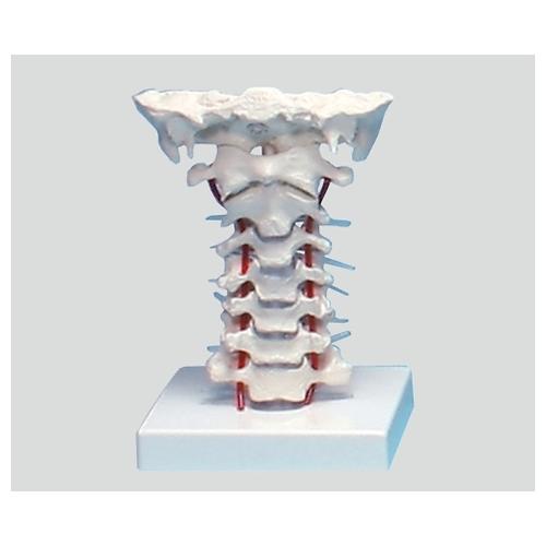 アズワン 頸椎モデル 180×160×125 4073 1個 [8-8420-01]