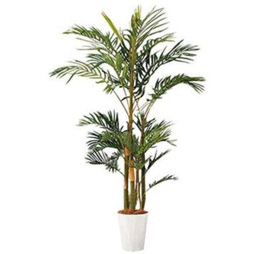 ■ナイキ アレカヤシ H1800〔品番:AG370N〕[TR-2088464][送料別途見積り][法人・事業所限定][直送] 人工樹木