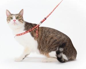 ペティオ 猫小町ハーネスリード 和桜 【猫用胴輪付き引ひも】