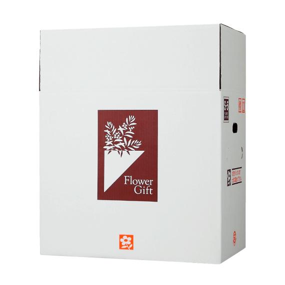 宅配ボックス S-Box-5(中型細長アレンジメント、5~6寸鉢物×2用) ×20組 花材・資材 配送ボックス 2020si
