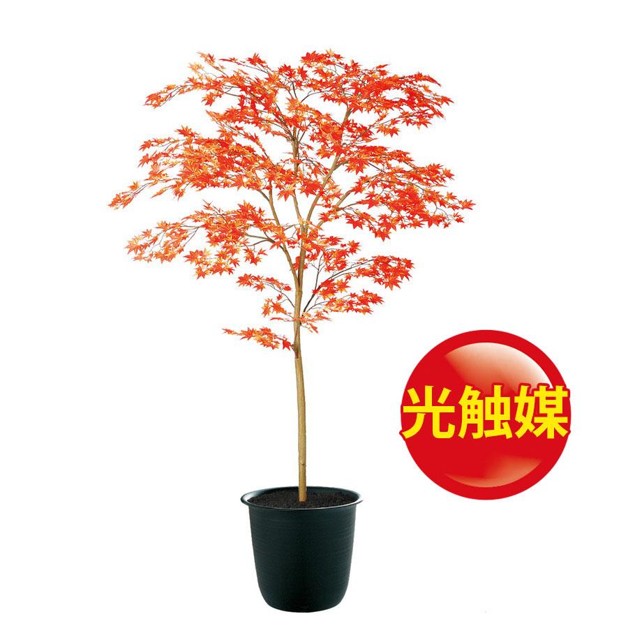 スーパーSALE10%OFF対象 人工観葉植物  光触媒 ヤマモミジ 150 RED FST (器:ツリー7(BK)) 91769|フェイクグリーン イミテーション インテリア 禅モダン 和風 造花 観葉植物 大型 観葉植物 おしゃれ 観葉植物 インテリア 《2018ds》