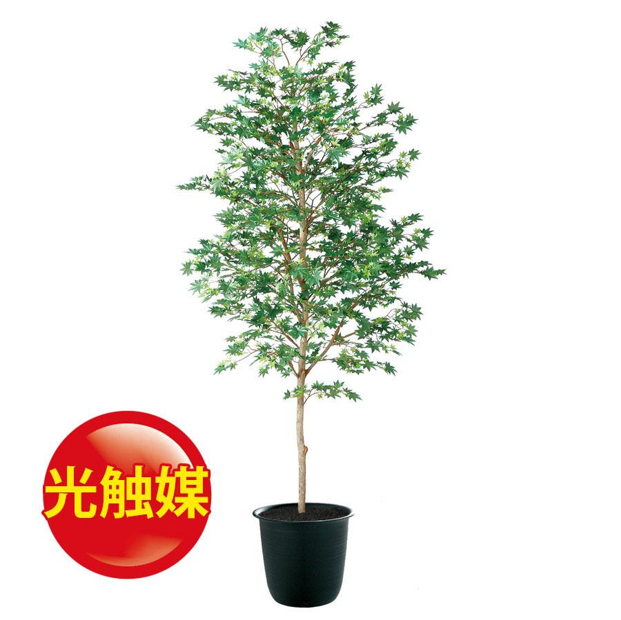 人工観葉植物  光触媒 ヤマモミジ 緑 200 (器:ツリー8(BK)) 91765|フェイクグリーン イミテーション インテリア 和風 造花 観葉植物 大型 観葉植物 おしゃれ 観葉植物 インテリア 《2018ds》