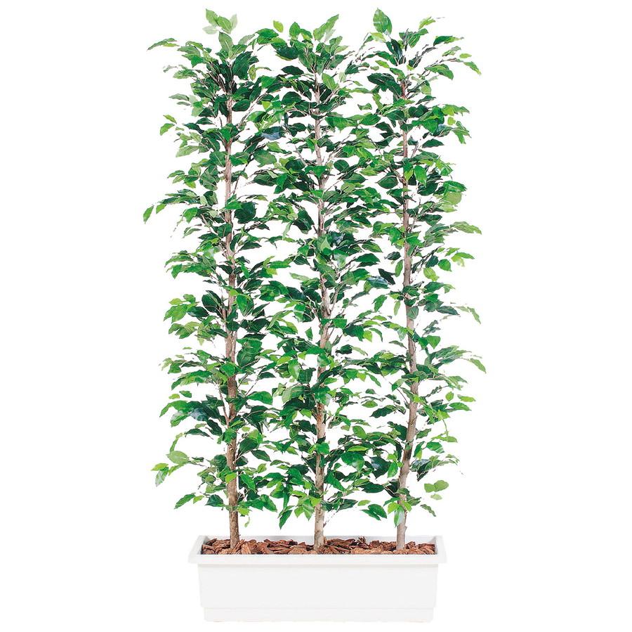 スーパーSALEセール対象 人工観葉植物 フィッカス ベンジャミナ パーテション 200 (器:ガーデンペット) 96356|フェイクグリーン イミテーション インテリア オフィス 観葉植物 大型 観葉植物 おしゃれ 観葉植物 インテリア 《2018ds》