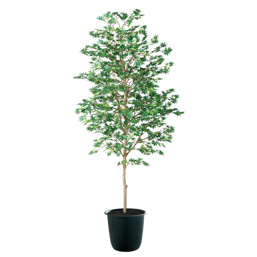 スーパーSALEセール対象 人工観葉植物 ヤマモミジ 緑 200 (器:ツリー8(BK)) 91765|フェイクグリーン イミテーション インテリア 和風 造花 観葉植物 大型 観葉植物 おしゃれ 観葉植物 インテリア 《2018ds》