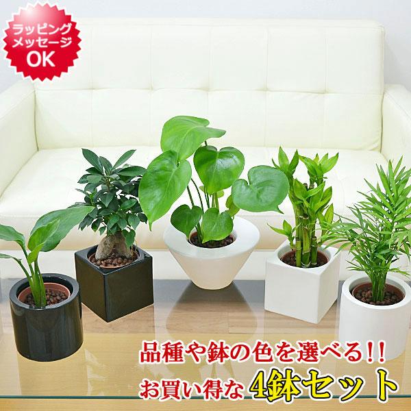 観葉 植物 ハイドロ カルチャー