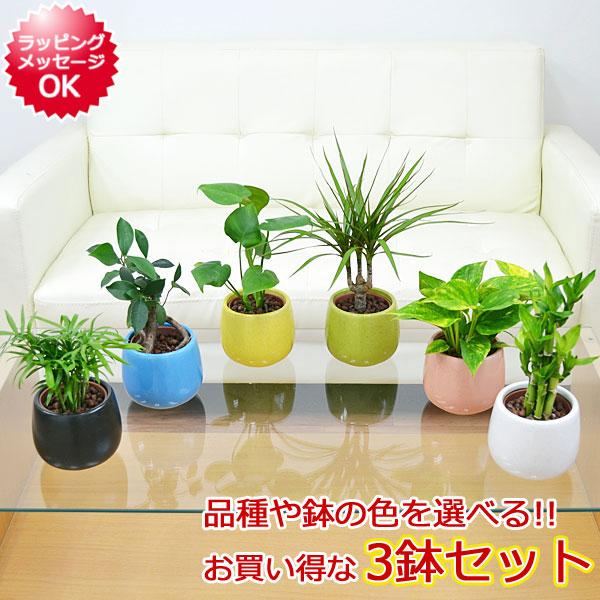 かわいい「ミニ観葉植物」、デスクに置けるサイズで育てやすいのは?