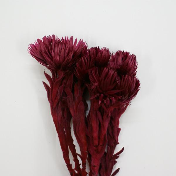 Silver daisy dry [to earth farm etc]/ artificial flower her barium material parts earth farms << Tokyo temple / dried flower >> de001-brd