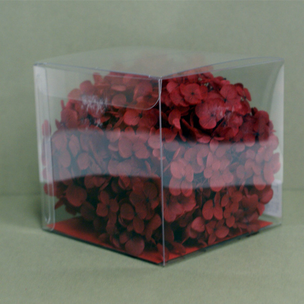 Preserved hydrangea Annabell CUBE [Tokyo temple etc]/ artificial flower material parts Tokyo temple << preserved flower hydrangea >> ff83105 wine red